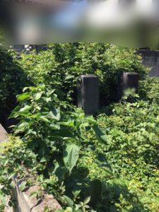 草やツル植物がかなり伸びており、お墓全体を覆い尽くしていた状態でした。